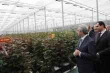 Սերժ Սարգսյանը Գողթ համայնքում ծանոթացավ վարդերի բուծման ջեմոցային տնտեսության աշխատանքներին