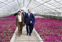 Мэр Тарон Маргарян посетил городское тепличное хозяйство Еревана