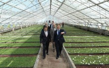 Yerevan Mayor Taron Margaryan vistied the city green-house